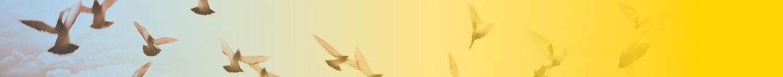 ייעוץ מערכות מידע Boutique Solutions